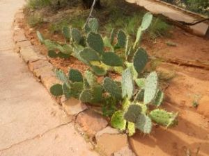 These cacti are rather close to the path and have big spines!