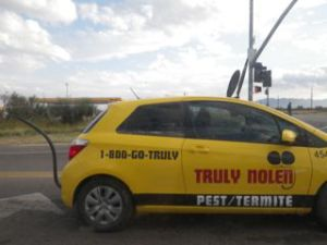 This pest control's car was decorated like a mouse, complete with tail, whiskers, and ears!