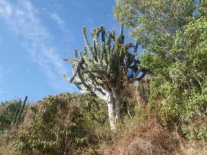 Funny cactus.