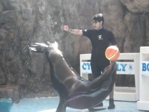 Notice that he's holding himself up by his flippers!
