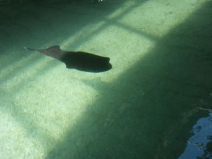 You can pay extra to snorkel with the stingrays!