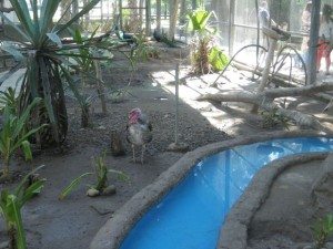 There were a couple of aviaries where you could walk among the birds.