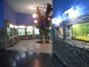 The interior part of the aquarium is quite small, but beautifully done.