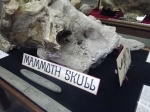 Mammoth skull.